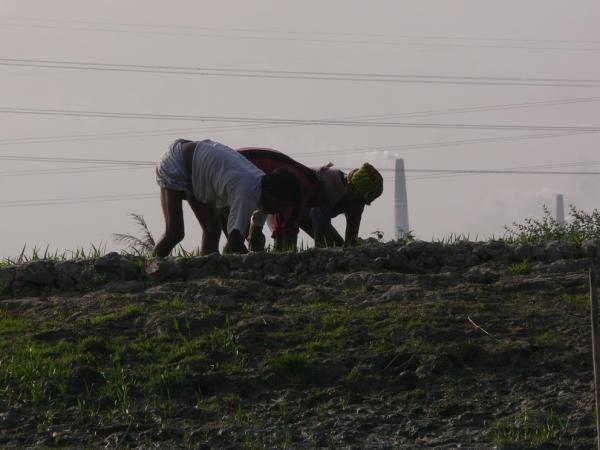Life in Bangladesh