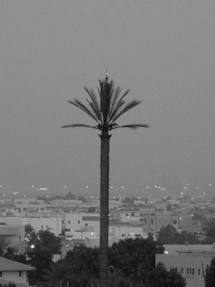 Meme les palmiers ont l'electricite!